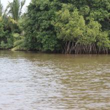 Vue Mangroves