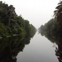 Traversée Parc National d'Azagny