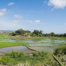 Riziculture dans la basse vallée de l'Onilahy