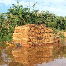 Exploitation de Typha angustifolia par les communautés locales
