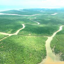 Mangroves de Tsiribihina