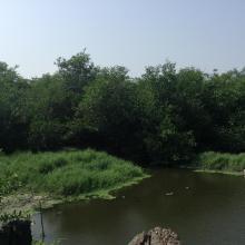 Densu delta picture
