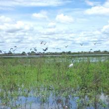 Quelques peuplement d'oiseaux d'eau du lac Ambondrobe