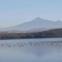 Congregación de aves acuáticas en la Presa Valsequillo, Puebla, Octubre 2011.