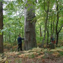 Old-aged forests preserved on islands among mires.