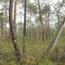 Large raised bogs are unique biotopes for Polesie region