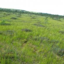 The appearance of the site's open peatlands
