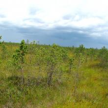 The appearance of the site's peatlands