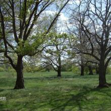 Floodplain oak wood is one of the most valuable biotops of the site