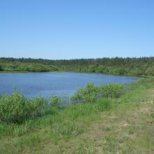 Ramsar site Vydritsa is situated in the Berezina River floodplain