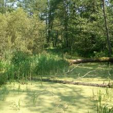 The floodplain contains numerous oxbows