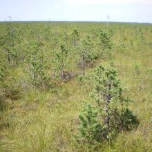 Morochno Ramsar Site