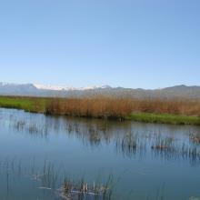 Zirewar Spring 2