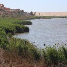 Oued As-Saqia Al Hamra en contact de la ville de La'youne et végétation émergente (vue vers l'amont)