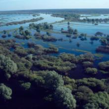 The floodplain of the Dnieper River in Spring
