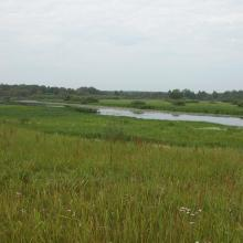 Meadows and swamps within the site are located mainly within rivers' floodplains, old river's channels.