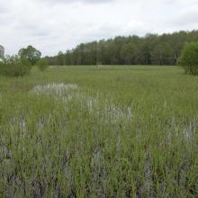 Floodplain meadows during the flood.