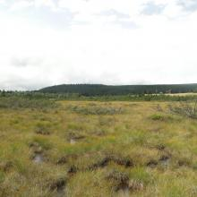 peatland on Izera River