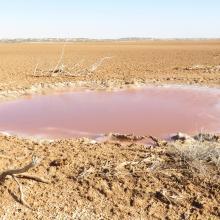 Imlili _ Poche d'eau montrant une forte cristallisation du sel