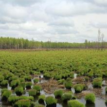 Youhao Wetlands
