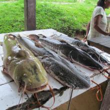 Mercado Puerto Nariño