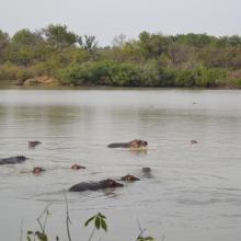 Mares au Hippo dans la plaine d'inondation de la rivière Pendjari