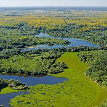 Campo Alagado - Pantanal - MT