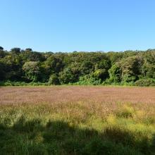 Landscape of Mulyeongari-oreum