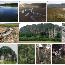 A, B, C) Sumidouro Lake in diferent seasons, D) sinkholes of the Sumidouro Lake, E) Limestone massif of the Cerca Grande State Park and archaeological site, F) Canyon in the Baú Cave limestone, G) Flooded doline in Cerca Grande, H) Lush forest, I) trunk and roots of a dry forest tree. J) Lapa Vermel