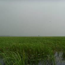 Wetland scenery of the site