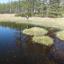 Odaira moor pond