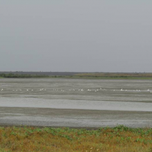 Habitat Type of Waterbirds, Nanthar Island