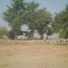 Photo 10 : Le site est le lieu d'alimentation de nombreux animaux de la zone