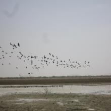 Photo 1 : Envol d'oiseau sur la mare d'Oursi en période sèche