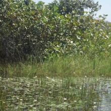 Photo 7 : Au coeur de la forêt galerie de Léra où oiseaux et animaux aquatiques se côtoient