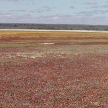 View east across salicornia, Lac Tsimanamsotsa, north end.