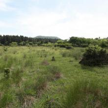 Pasture and forests, southwest from the central watershed