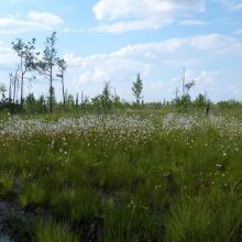 mesoeutrophic bog