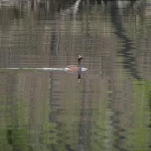 Dnipro-Oril Floodplains