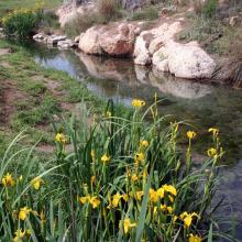 Marjal de Almenara. Detalle de zona de surgencia