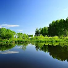 the nature landscape of the wetland in summer