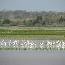 communautés aviaires