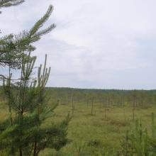 Drozbitka-Svina site