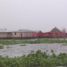 The red hotel in the village of Ganvié, with water hyacinth