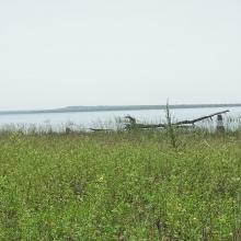Vue de la zone humide