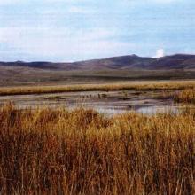 Vegetación de totorales en el espejo de agua y orillas.