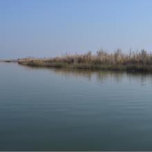 AL-Hammar marsh/ Al-Kermashyah/ Al-Nasisiryah
