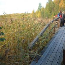 Gammelstadsvikens nature reserve, viewing point