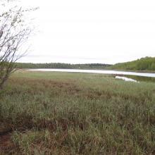 Gammelstadsvikens nature reserve