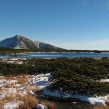 Peatbog on Równia below Śnieżka Mt